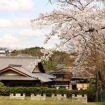 外観_春(桜)