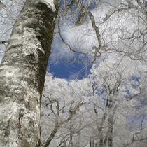 園地から見上げた冬の空