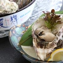 山陰夏の味覚 岩牡蠣のトップブランド『夏輝』