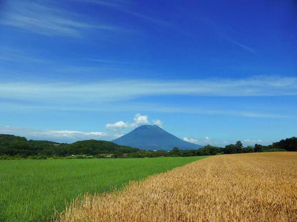 季節:夏の羊蹄山