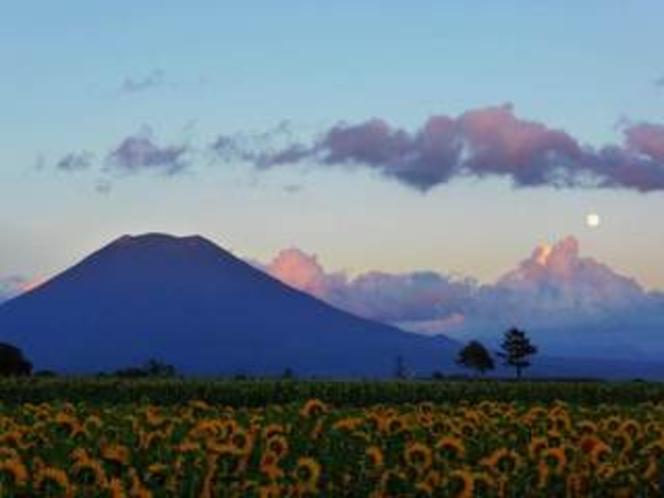 季節:ひまわり畑と夕暮れ時の羊蹄山