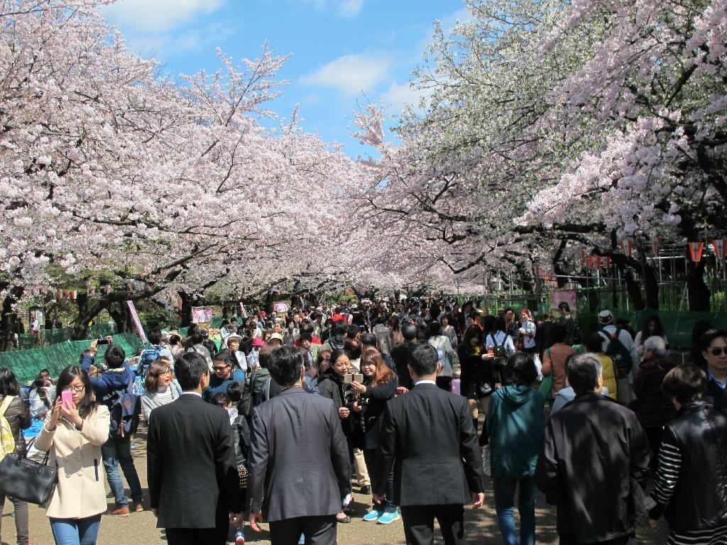 上野公園(徒歩で約15分)