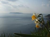 黒岩水仙郷と沼島