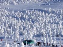 蔵王の樹氷めぐり