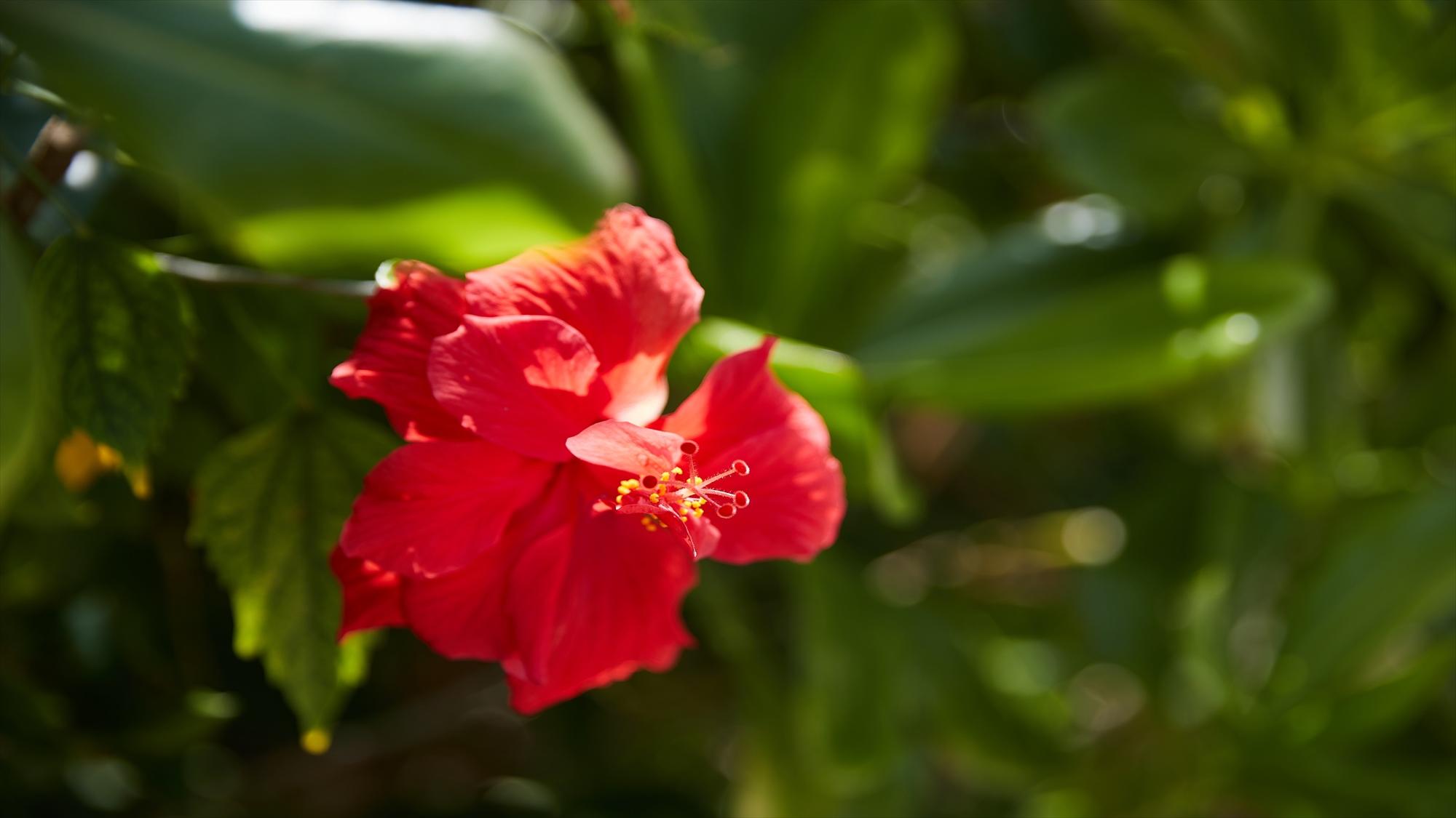 色とりどりの花が、リゾートの思い出を彩ります