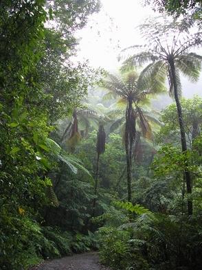 【期間限定39プラン♪】奄美群島世界自然応援プラン♪素泊り