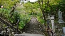 *【奈良・長谷寺の青もみじ】まだまだ緑色の青もみじでもうっとりするような美しさ。