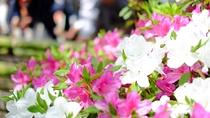 *【奈良・長谷寺のどうだんつつじ】シーズンは4月・10月中旬~11月中旬♪