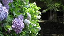 *【奈良・長谷寺のあじさい】四季を通してお花が楽しめる長谷寺。雨の日のアジサイも素敵です