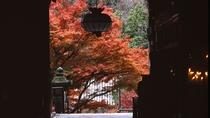 *【奈良・長谷寺の紅葉】シーズンは10月中旬~12月上旬までとなり、11月はもみじ茶会も!