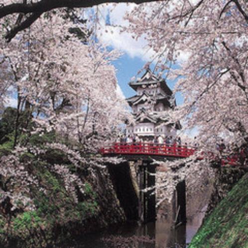 弘前城、満開のさくら。お車で1時間程度です。