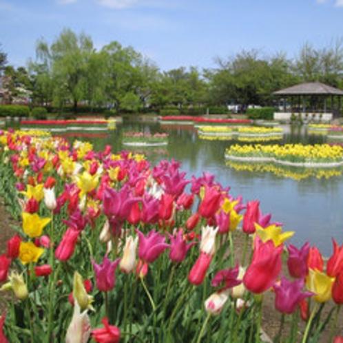 砺波チューリップ公園(4月下旬~5月上旬)
