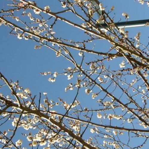 【冬】 熱海梅園・梅まつり開催1月〜3月 会場までは車で約5分です