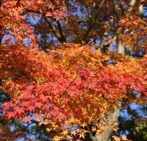 【秋】 熱海梅園で遅めの紅葉をお楽しみください