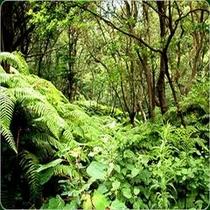 仙酔島 自然風景