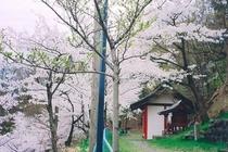 薬師堂がある西公園の桜