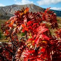 *【周辺紅葉画像】秋には志賀高原全体が秋色に染まります。