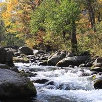 *【周辺(秋)】豊かな自然に包まれた志賀高原に佇むくつろぎ空間をお楽しみ下さい。