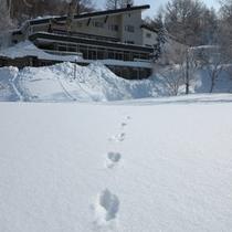 *【石の湯の庭】まっしろな雪原の上を駆けるウサギの足跡。スノーシューのお散歩でも出会えます♪
