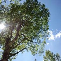 【夏】木漏れ日から差し込む太陽のパワーを全身に感じて、リフレッシュしよう☆