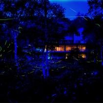 *【外観】天然記念物「石の湯ロッジホタル」は当館目の前6月中旬~9月頃まで乱舞♪