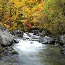 *【周辺の渓流】川のせせらぎと秋の景色を同時に味わえる贅沢な時間があります。