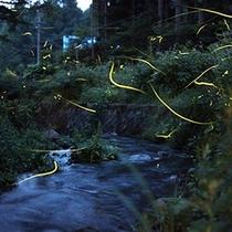 【ホタルの乱舞鑑賞】敷地内の小川にて。見ごろは6月下旬〜7月中旬