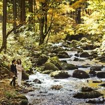 【秋の景色】敷地内を流れる小川