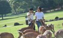 カップルや夫婦そろって楽しめる奈良公園。