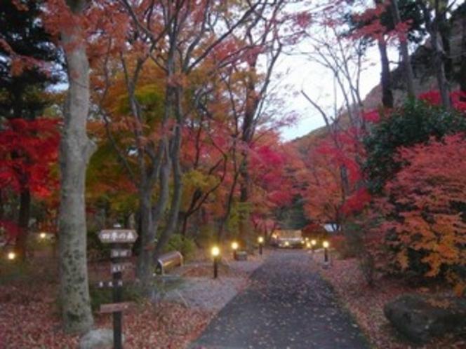秋」四季の森夕暮れ