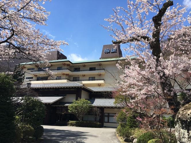 桜と柏屋搭屋