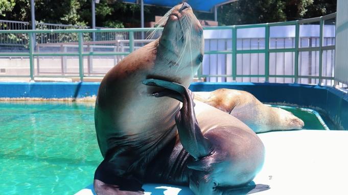 【桂浜水族館入館券付】SNSで話題のハマスイでカワウソやペンギンなど海の生き物と癒しのふれあい体験♪