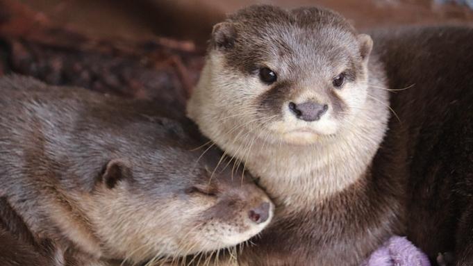 【しこくるり】桂浜水族館入館券付♪ハマスイで海の生き物たちに癒されよう《一泊夕朝食付》