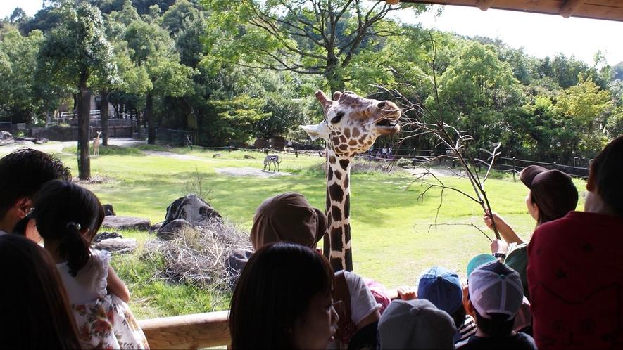 約110種類の動物さんが暮らす広々とした園内では動物さんのありのままの生態を見ることが出来ます。
