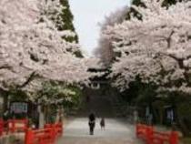 仙台東照宮♪桜の名所です♪駅から電車で約8分