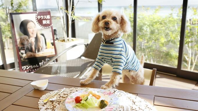 【ワンちゃん旅行×ひとり旅】お部屋食&アメニティ充実で安心!愛犬と一緒に気まま旅♪