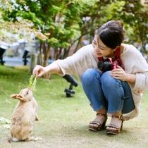 かわいいウサギとふれあい♪餌やりもできるよ!