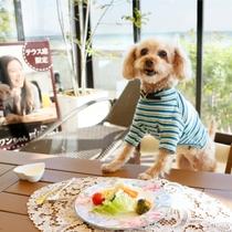 レストランテラス席でワンちゃんと一緒に朝食♪