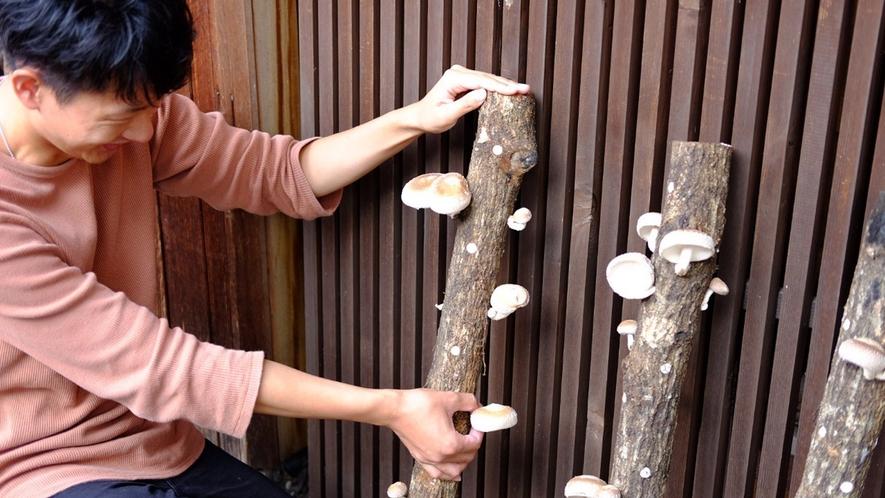 ご来館の際にシイタケの原木を実際に見ていただきお好きなシイタケをチョイスしていただきます。
