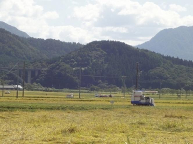 関川産新米コシヒカリの刈入れ  味わいに来てください!