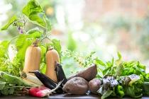 自家農園でとれた野菜