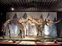 明石市文化博物館