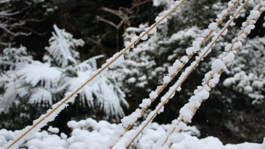 【冬】雪化粧の兼六園
