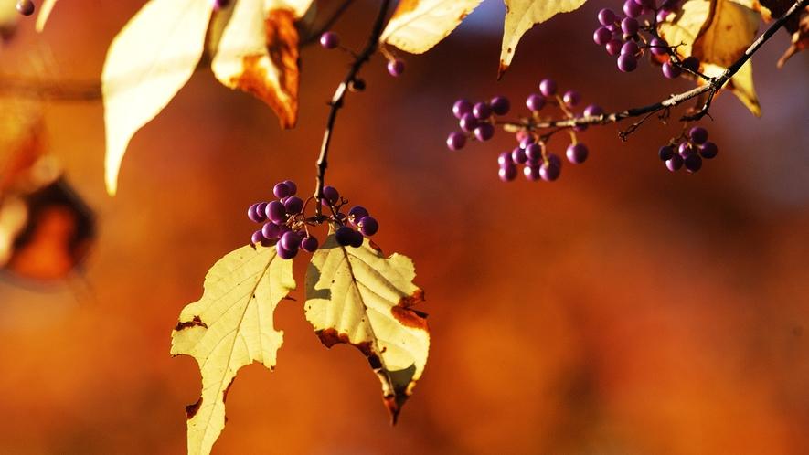 【秋】 兼六園内の紅葉(10月下旬)