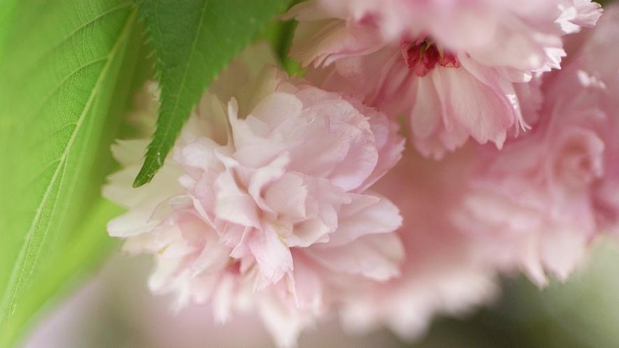 【春】兼六園  兼六園まで徒歩5分の好立地