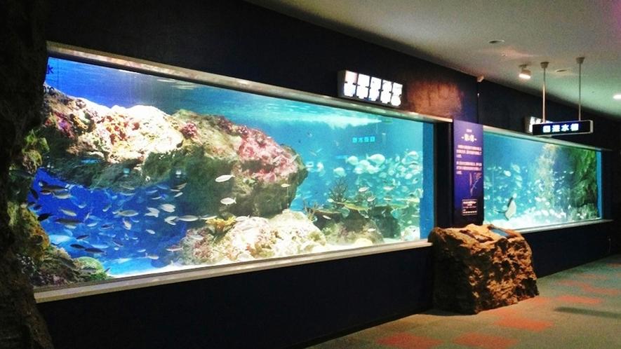 サンピアザ水族館「回遊水槽」