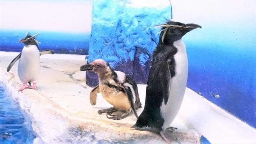 サンピアザ水族館「ペンギン水槽」