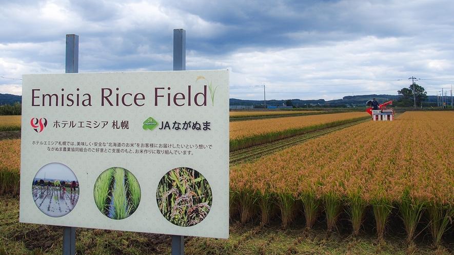 ホテリエ達が田植え・稲刈りに取り組んでいるプロジェクト「emisia Rice Field」