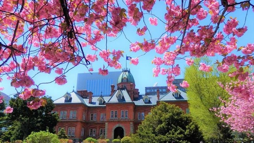 北海道の春 道庁