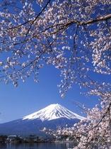 河口湖からの富士山_春